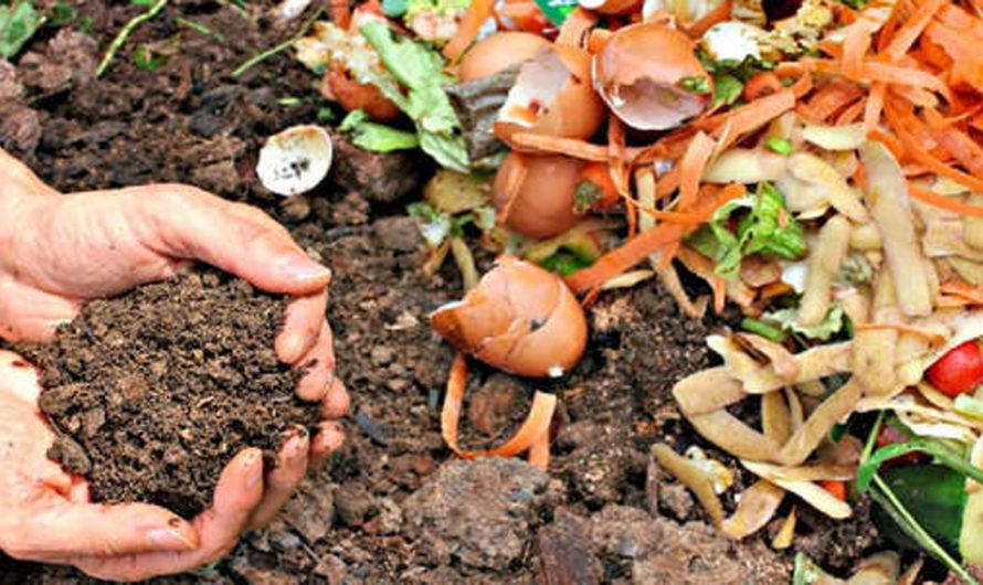 COMPOST: Cómo transformar la mitad de nuestra basura en tierra fértil